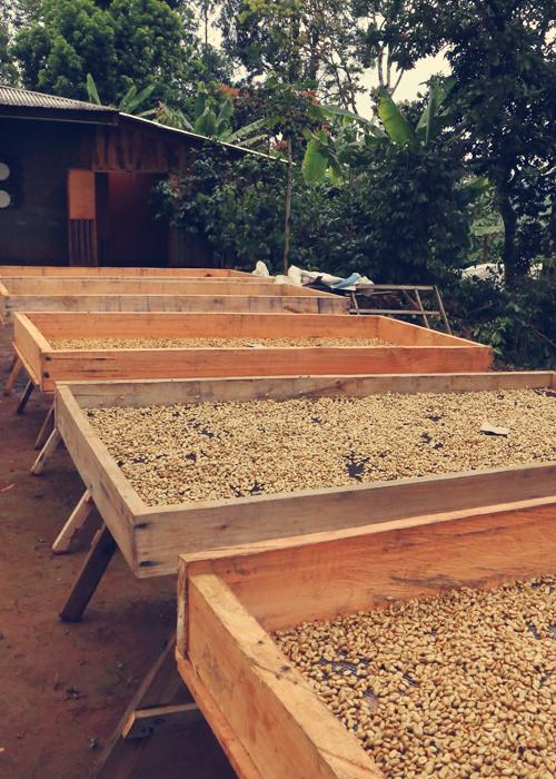 Cameroon Hilltop Farms Light Roast